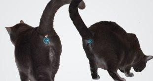 Un bijou pour cacher l'anus de votre chat...