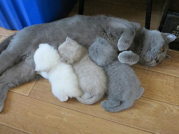 proud-cat-mommies-351__605