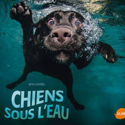 Chiens sous l'eau (livre)