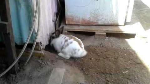 Ce lapin creuse un trou pour libérer un chaton!