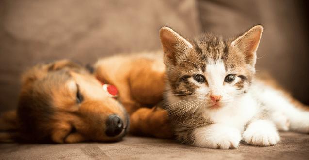 Cette startup loue des chatons et des chiots à la journée