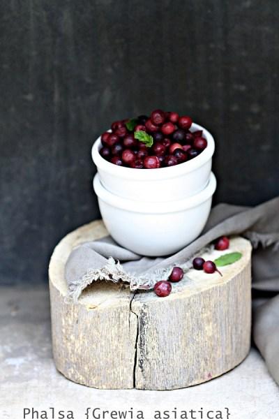 Cooler | Phalsa Berry Sharbat – 'Blendit' like Vikas Khanna #summer #cooler #inseason #kitchenaidindia