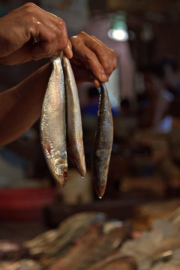 Fish Market, CR Park, New Delhi