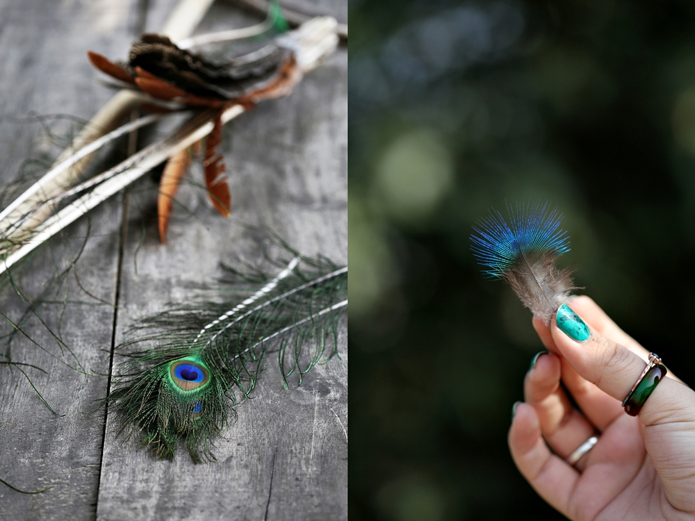 Peacock feathers, Lakshman Sagar