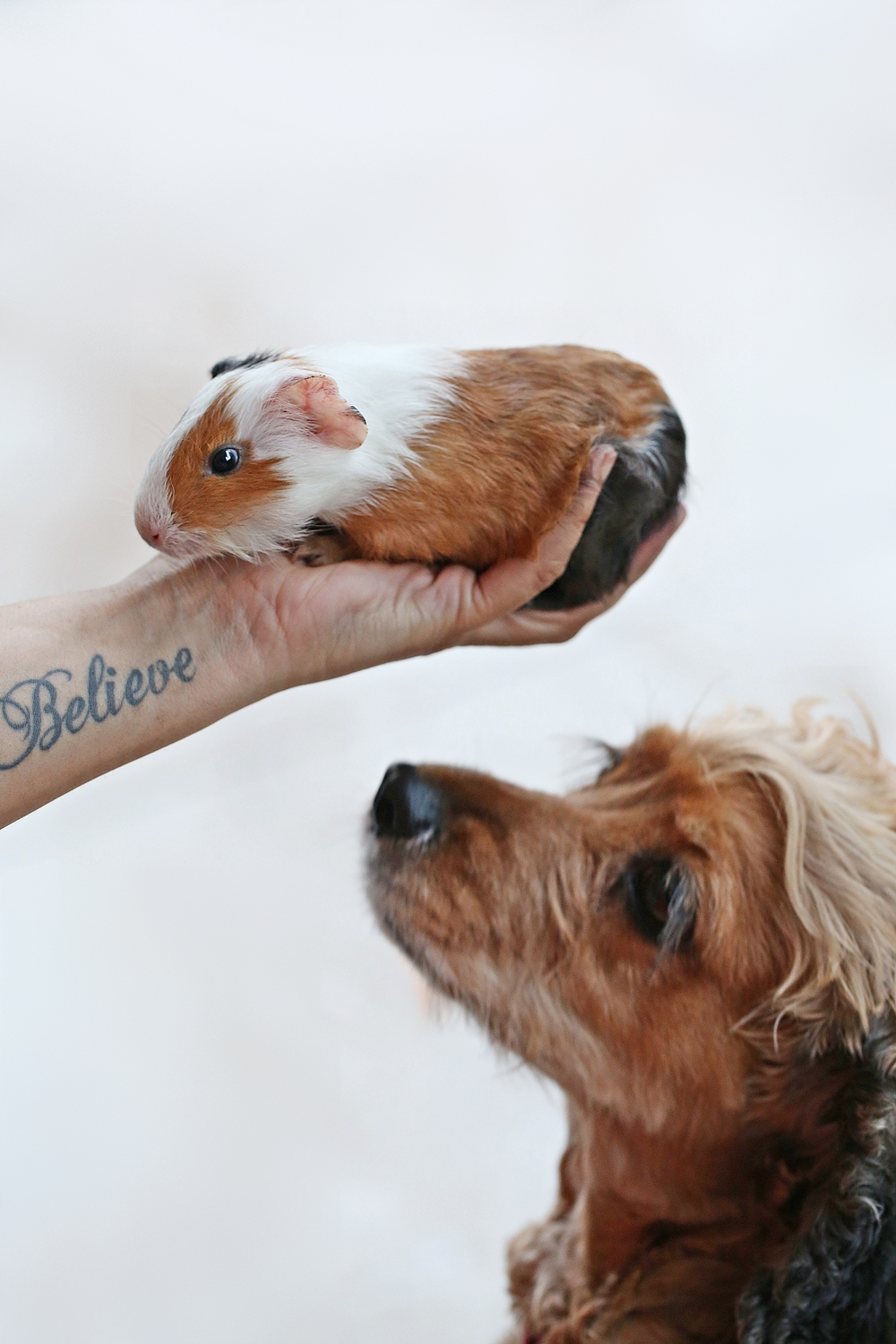 Coco with Guinea Pig