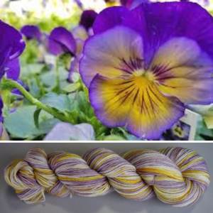 Inspiration for the pansy colourway