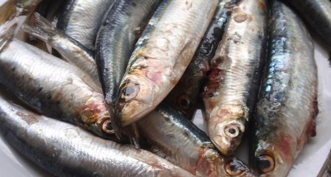 foto_pesce