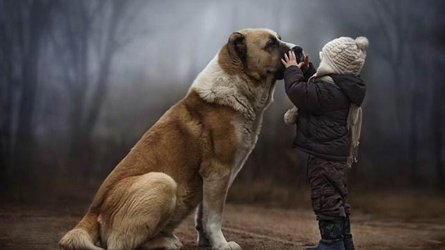 foto_the_blue_dog