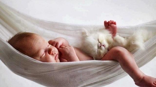 foto_gatti e bambini