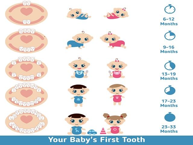Calendario Dentini.Denti Da Latte Quali Sono E Quando Cadono