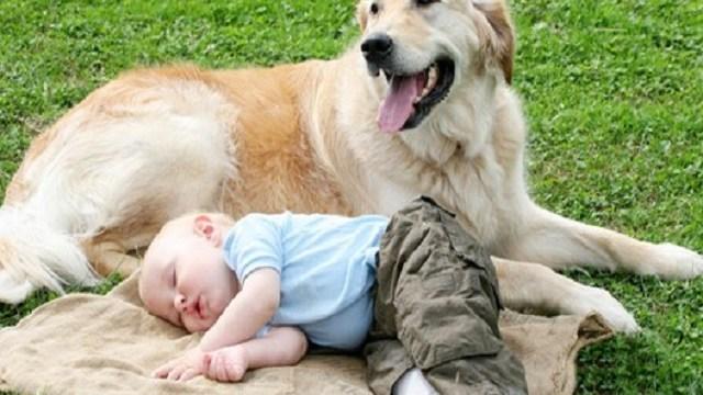 foto labrador bambino