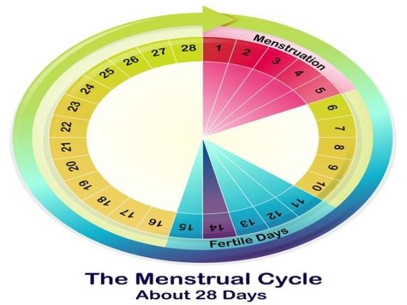 giorni fertili per rimanere incinta
