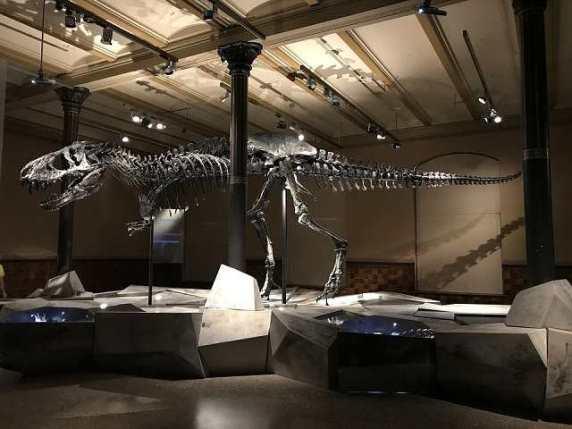 museo dinosauri
