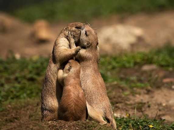 foto abbraccio