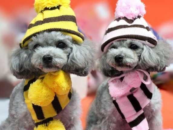 foto cagnolini vestiti