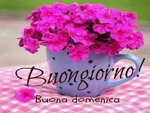Buona Domenica Immagini Vignette E Foto Divertenti E Con Frasi
