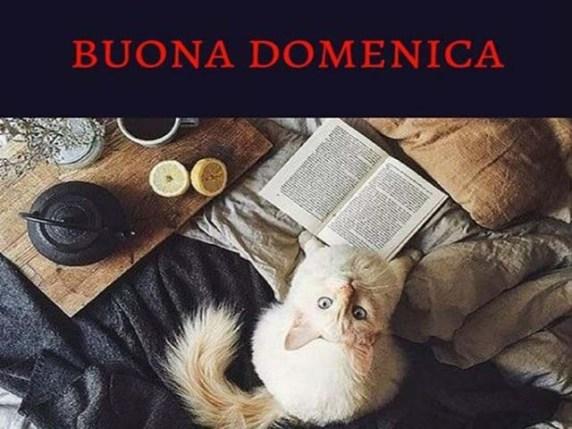 Foto Immagini buona domenica 7