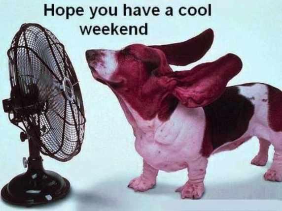 foto immagini spiritose weekend cane