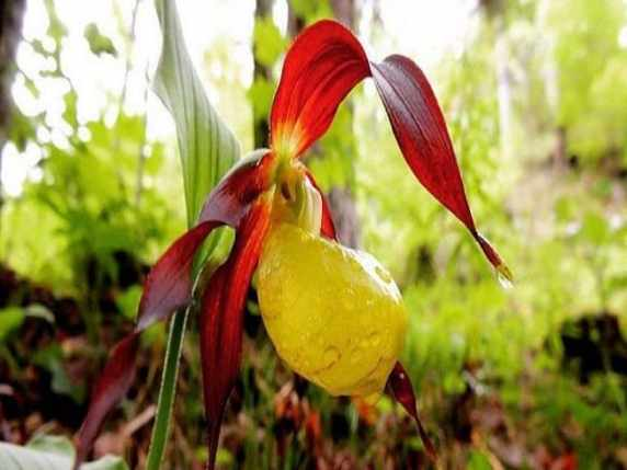 Foto fiore raro