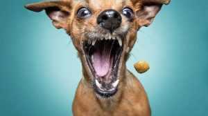 foto immagini spiritose cane