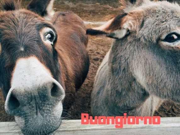 foto immagini buongiorno divertenti buffe