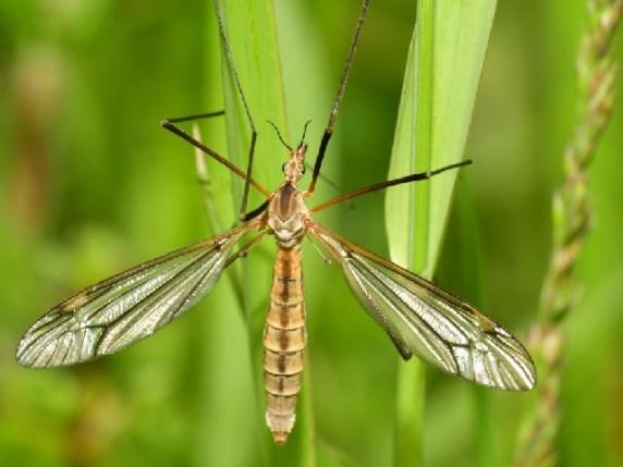 Punture zanzare rimedi naturali piante