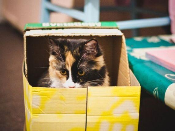 gatti e bambini nelle scatole
