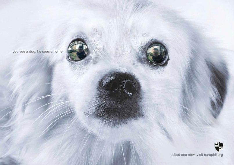 public-social-ads-animals-105[1]
