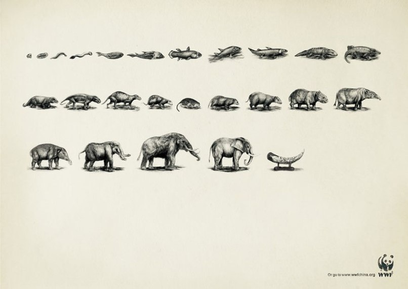 public-social-ads-animals-57[1]