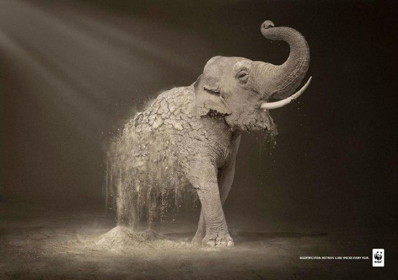 public-social-ads-animals-9[1]