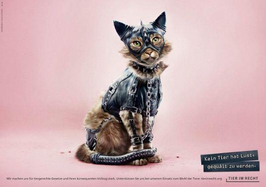 Foundation Tier im Recht - 3D Animals 1cat