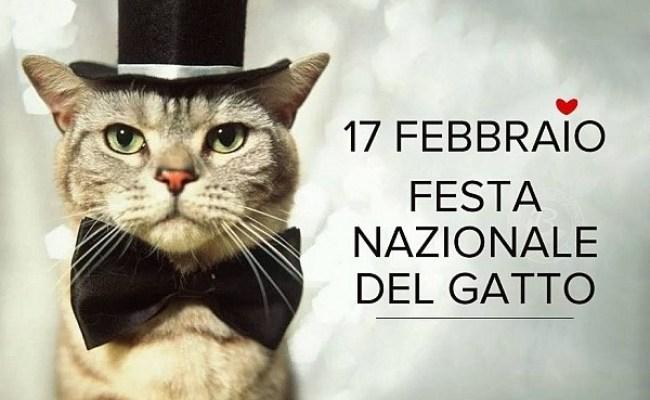 17 Febbraio Festa Del Gatto Per Appassionati Di Gatti
