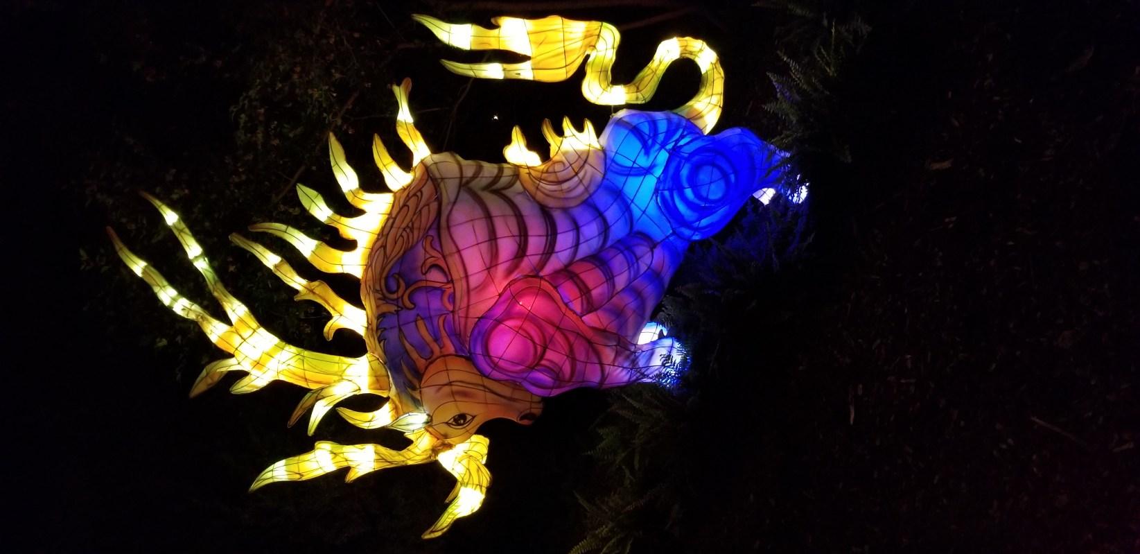 Jardin Botanique / Jardins de lumière