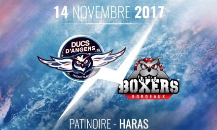 Ligue Magnus (20e journée) : Les Ducs d'Angers reçoivent les Boxers de Bordeaux, ce mardi à 20h30 !