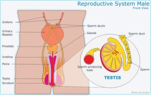 Sexual Reproduction  Pass My Exams: Easy exam revision