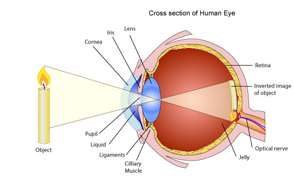 Use Of Lenses For Correcting Vision Pass My Exams Easy Exam