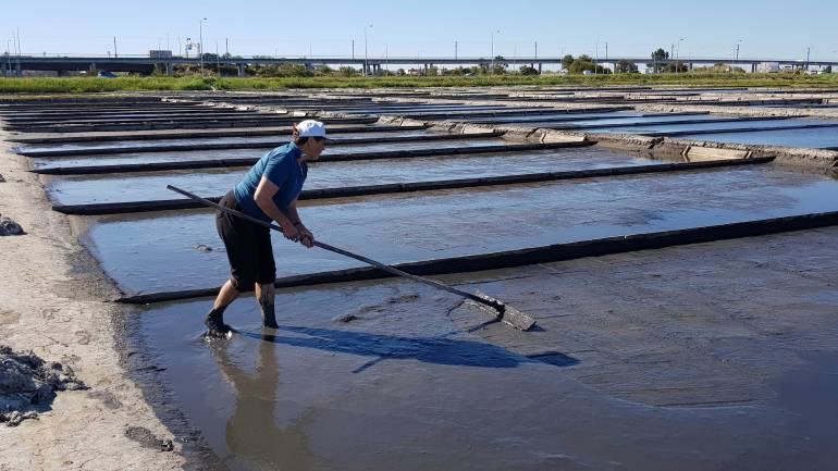 Woman working in the Aveiro Salt Pans, pulling a rake across the wet, muddy silt.