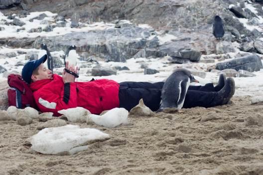 A curious Gentoo penguin in Antarctica