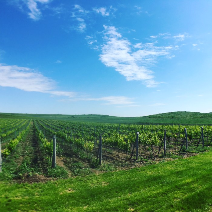 A cool day trip from Sofia is visiting Villa Yustina Winery