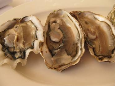 Galvin oysters