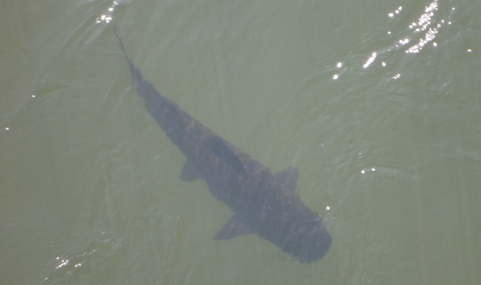 14-argentina-iguazu-falls-fish