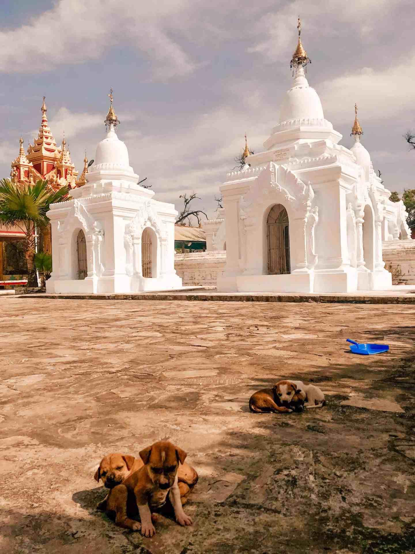 Puppies at the pagodas - Mandalay