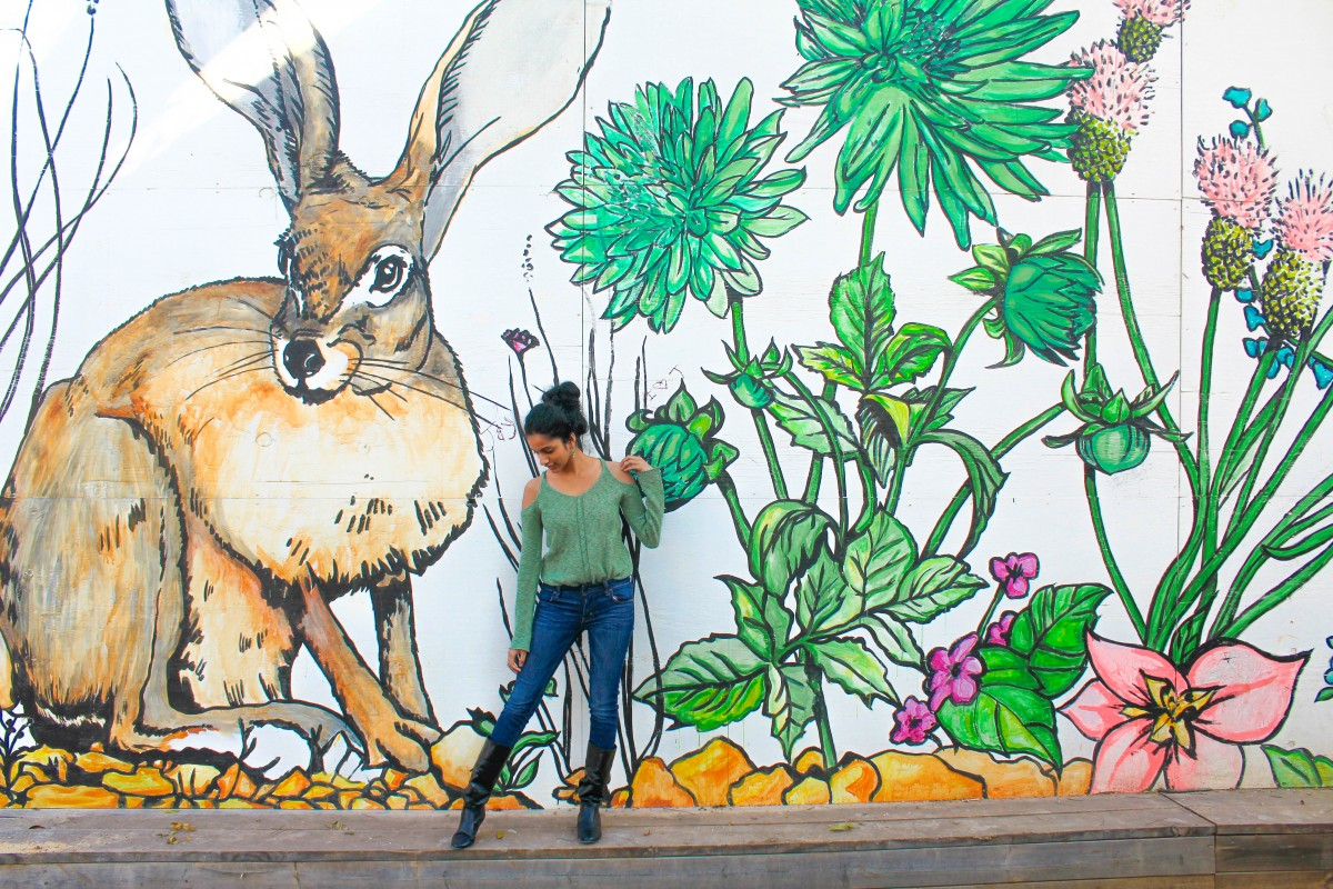 Seeing street art is one of the best things to do in Bishop arts district . This is a photo of a the famous rabbit and cactus and flower wall in Bishop Arts District.