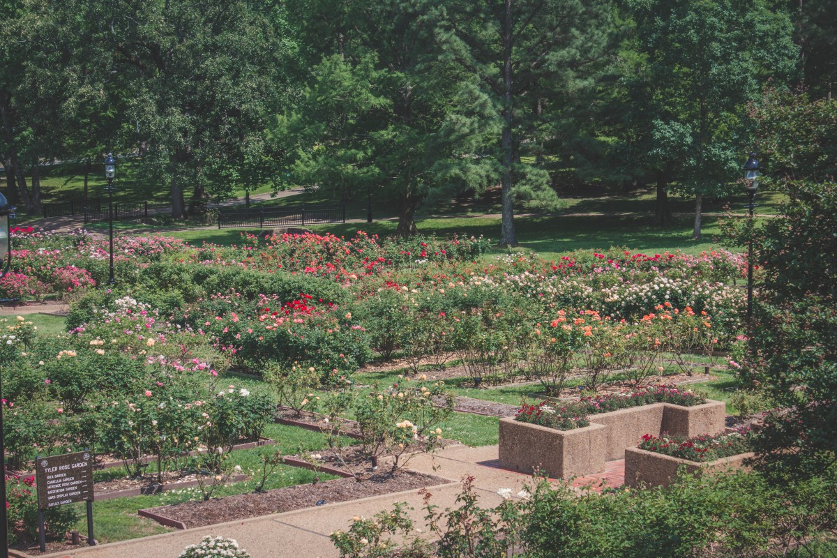 Rose-heavy Section Of The Tyler Rose Garden