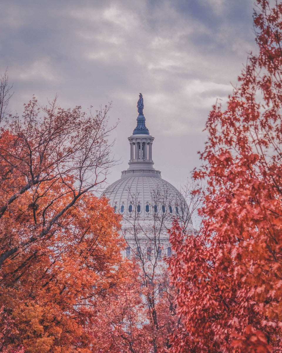 Orange and red leaves covering up one of D.C.'s most iconic buildings. This is fall in Washington D.C., the best time to visit.