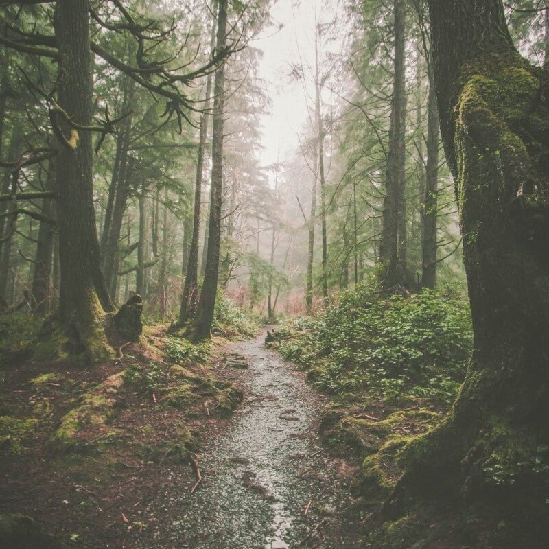 Forks Washington forest
