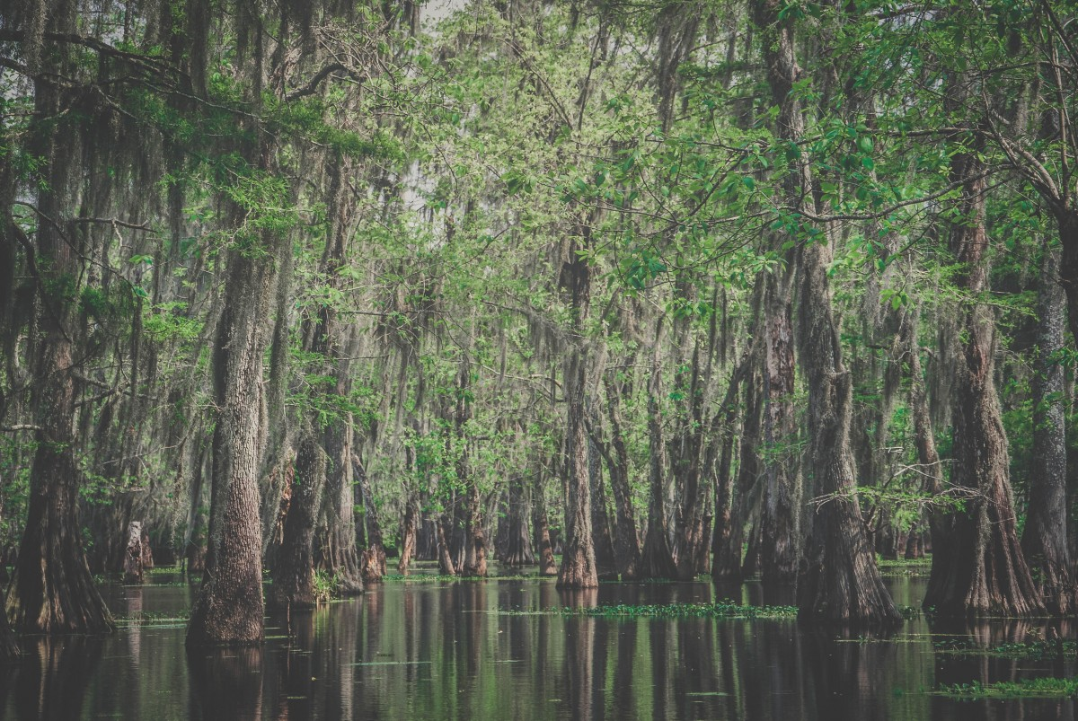 Things to do in East Texas: Louisiana bayou that looks similar (ish) to Caddo Lake