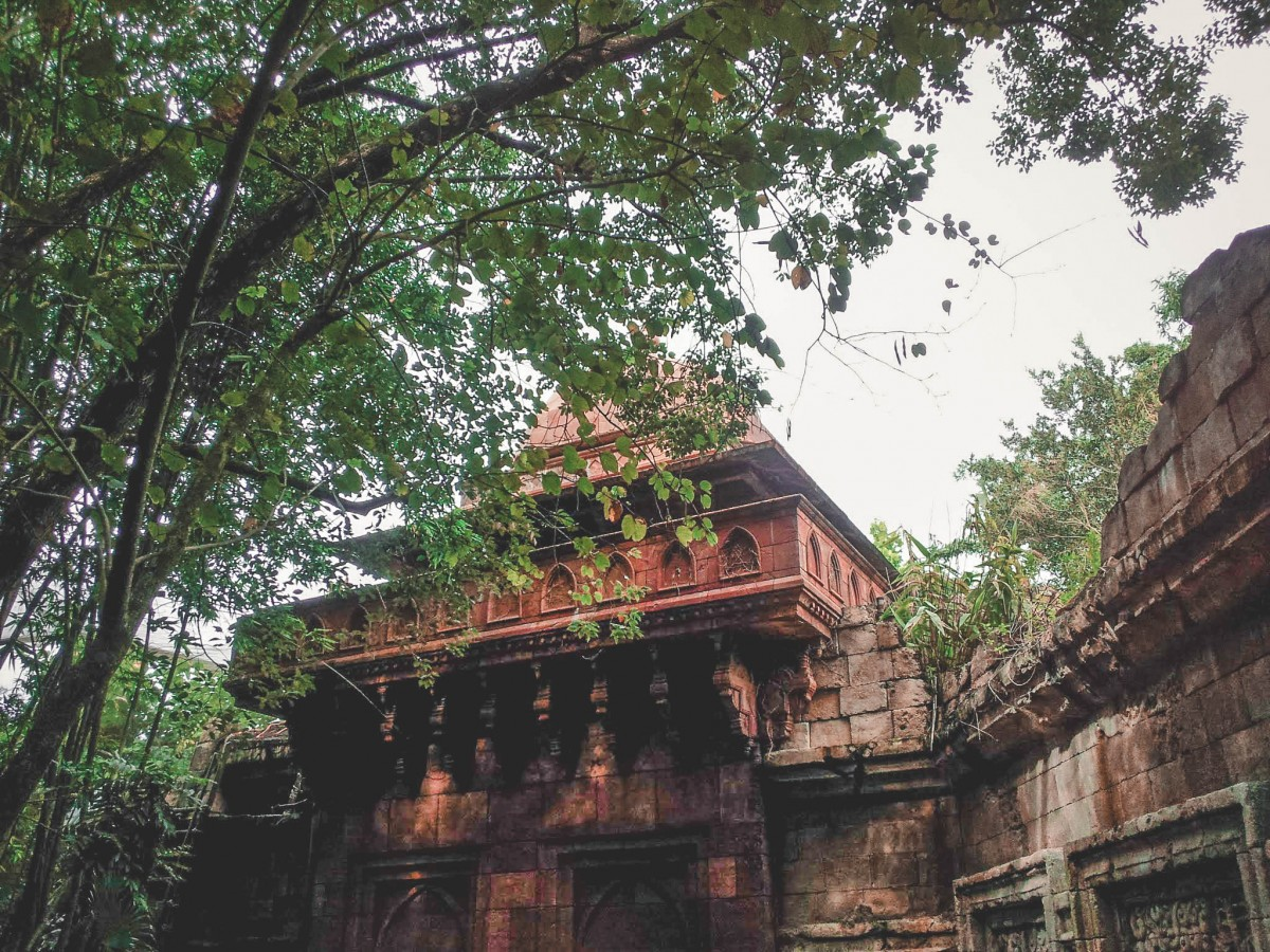 top attractions to visit during one day in Animal Kingdom featured photo