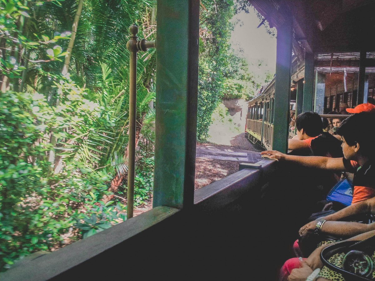 looking out Wildlife Express