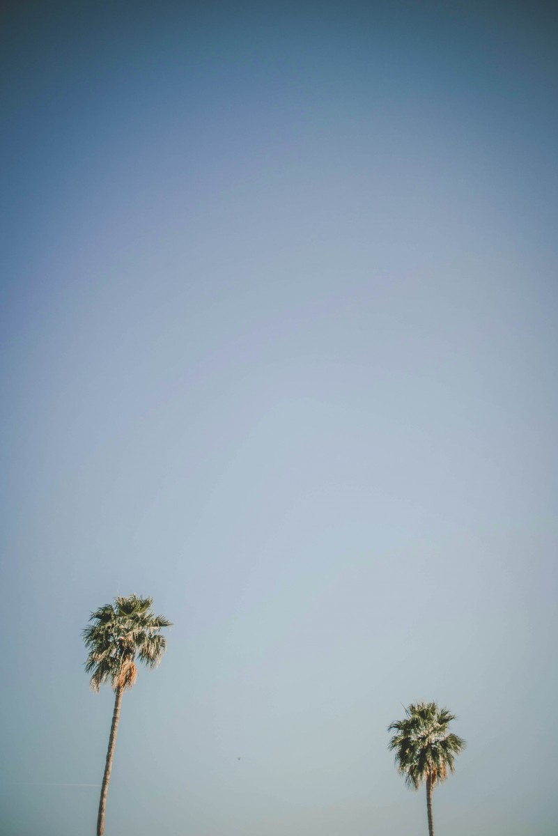 photo of palm trees facing up to the sky, much like the palms found at El Dorado Park